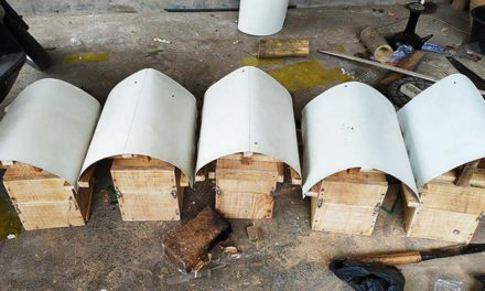 Budidaya Lebah Trigona Bagi Pemula