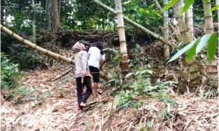 Berburu Klanceng di Hutan Bambu