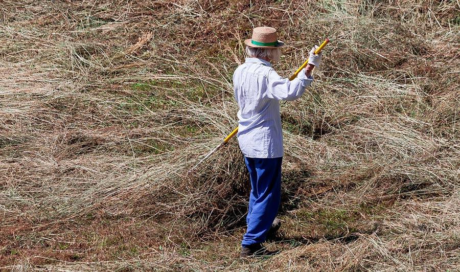 cara membuat herbisida organik