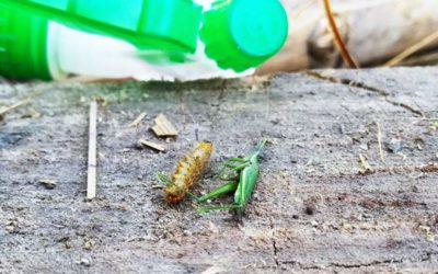 Membuat Pestisida Nabati, Efek Lebih Kuat