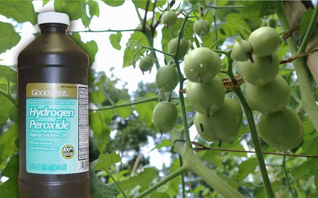 cara menggunakan h2o2 untuk tanaman