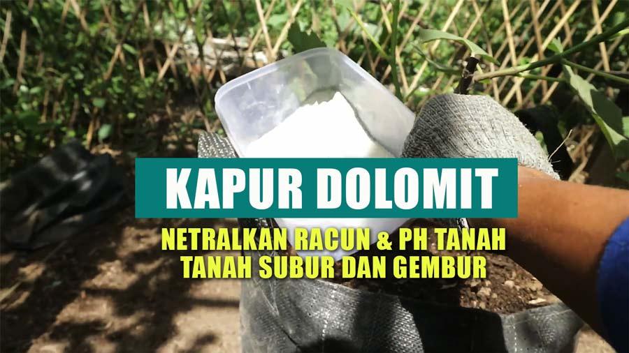 cara menetralkan ph tanah dengan kapur dolomit