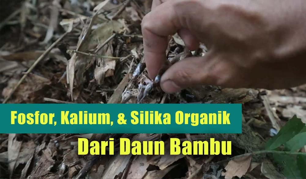 manfaat kompos daun bambu