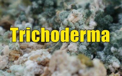 Cara Membuat Trichoderma, Lebih Mudah dan Praktis